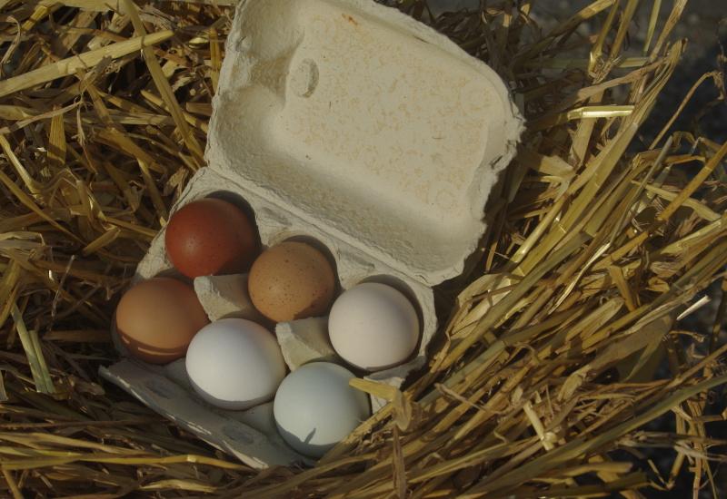 Freiland Eier